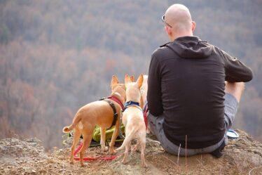 Pet-Friendly Places